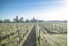 Vignes Jura Plaisance